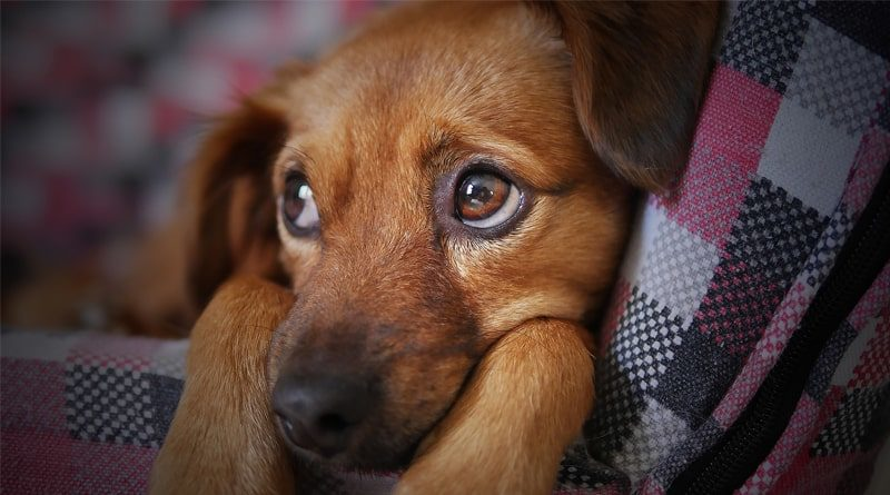 Montpellier 2e ville préférée des chiens