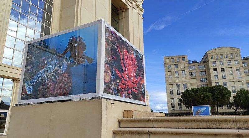 Expo Planète Méditerranée Laurent Ballesta Hôtel de Région Montpellier / © Peter Avondo - Snobinart